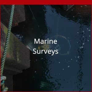 Marine Surveys